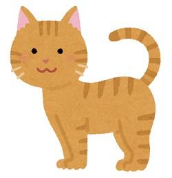 猫 種類 雑種
